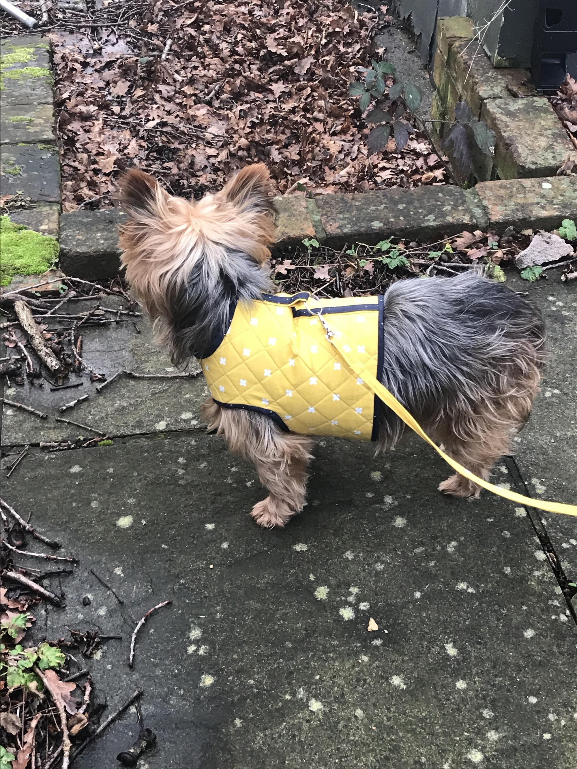 Dog Coat Side